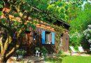 Café mit Käuzchen – Vom Leben im Wald