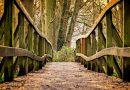 Wandern im Frankfurter Stadtwald