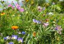 Stadt tritt Bündnis für biologische Vielfalt bei