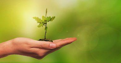 25. Apr Tag des Baumes: Bäume werden nachgepflanzt