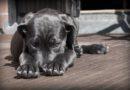 Hundekotbeutel im Stadtbüro erhältlich