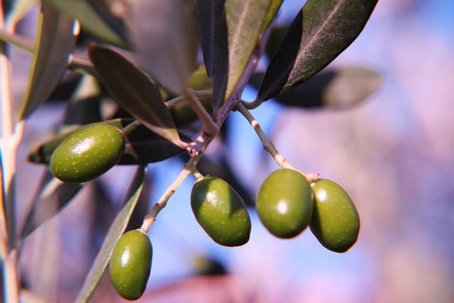 Olive Grill Imbiss: Dennis kocht für Euch am 1. Mai
