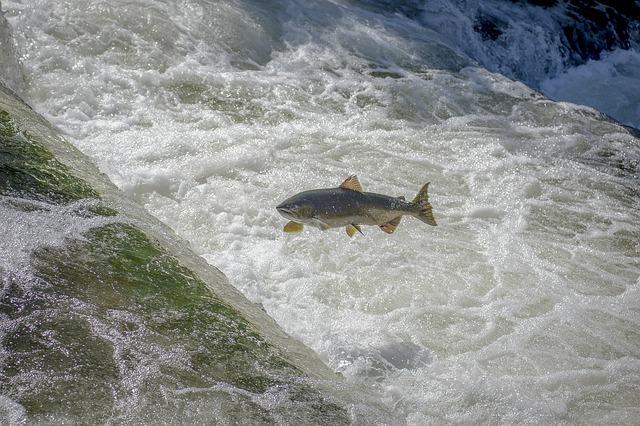 Main-Wasserkraftwerk Kostheim: Bau des verbesserten Fischaufstiegs beginnt